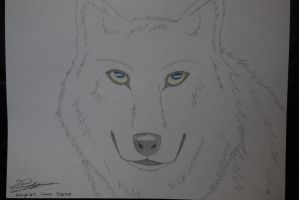 White wolf - front view by haseodragon