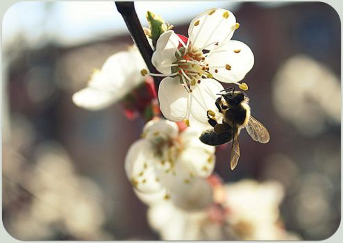 .Spring. by leani