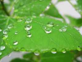 Droplets by Seigner