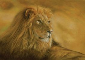Panthera Leo, Lion by spcarlson
