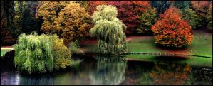 Autumn Colors Pano... by MichiLauke