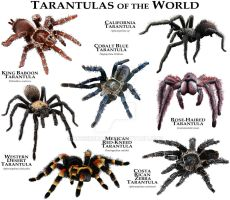 Tarantulas of the World by rogerdhall