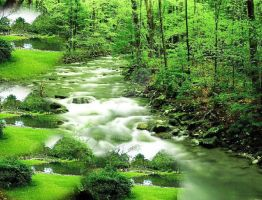 River in the green forest by lmtcloud