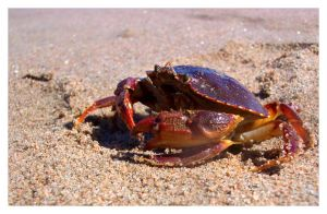 crabby by an6el-of-death