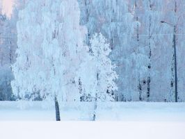 trees of ice by PhotoFrama