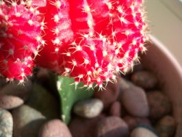 Cactus by Eitvys200