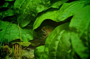 frog inside leaves by 1mperfecti0n