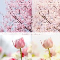 Cherry blossom action by MagicalMoment