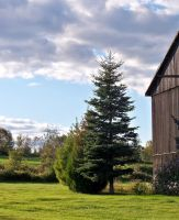 Tree and Barn by philippeL