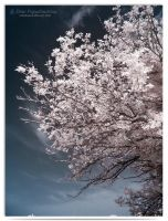 Spring - infrared by LightSculpting