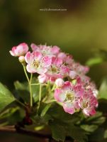 Flowers in all its simplicity by MTO70