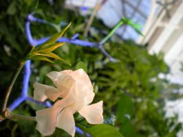 Conservatory6 by KateCollett