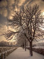 Frozen silence by AndyLaRoque