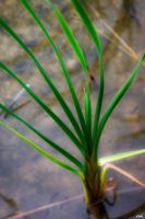 Grass by wolmers
