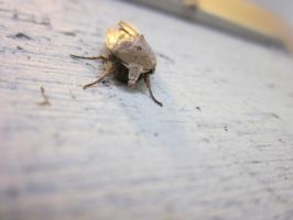 Moth 3 by AnnabellLee666