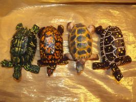 More Hatchling Turtoisapins by riverTurtle790