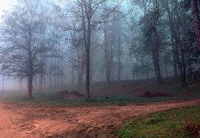 Foggy morning in park. by elivarz