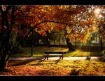 Autumn 2011 by Riffo