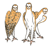 A -transparent- Parliament of Owl Girls by MommaCabbit
