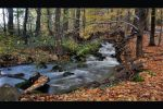 Forest stream II by tomsumartin