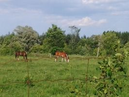 two horses grazing in the field by kyupol