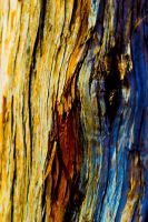 psychedelic wood by durpleman