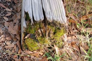 Mossy Wood by crystal-koi-fish
