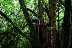 Snow White - Among the trees 2 by Makuro-chan