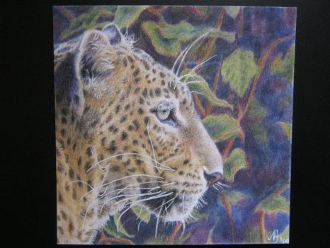 Leopard in colord pencil by LinkenparkLove