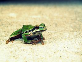 Mr. Frogger by GlassGazer
