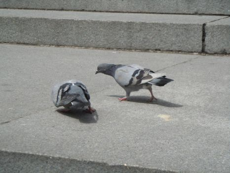 PIGEONS by icedragon248
