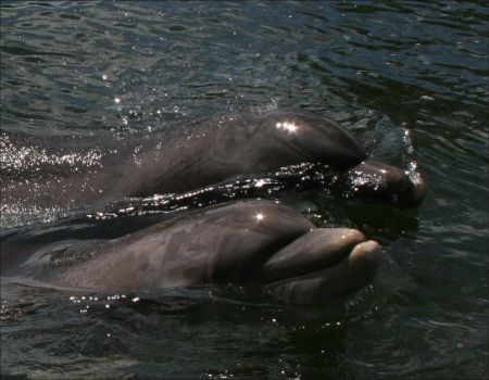 Sparkling Dolphins by AshiraAngel