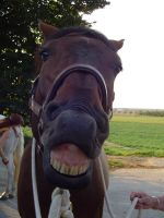 SMILE Horse Portrait Stock by LuDa-Stock
