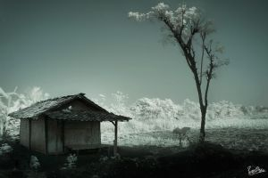 ...The Lonely Shack... by ditya