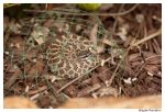 Pacific Rattlesnake by Emotion--In--Motion