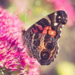 Square Butterfly Photo No. 369,304.5 by pagit