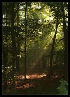 Enchanted Morning 2 by Forestina-Fotos