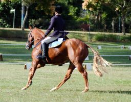 Dressage canter circle flaxon by Chunga-Stock