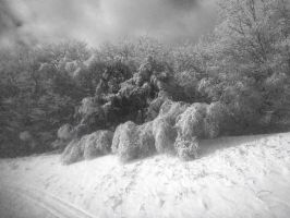 Frozen Forest by tony-dinozzo