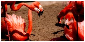 Flamingos by JordanWalker