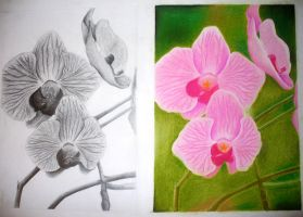 Orchids by Lena-LU