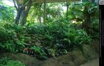 Rain Forest Plants by DamselStock