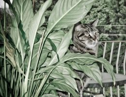 Cat plant by shok75