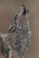 Howling wolf by Ferluner