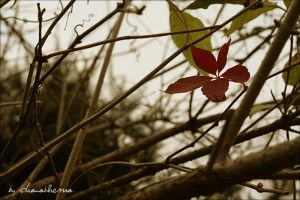 The heart of wild by dianathema