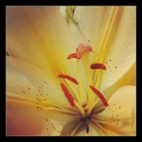 Heart of Lily by Aenea-Jones