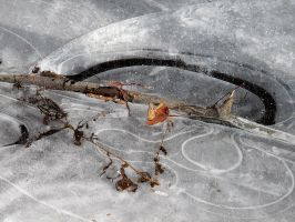 patterns in the ice by ariseandrejoice