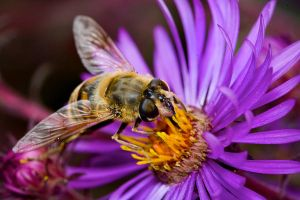 bee nr 2 by artfoto