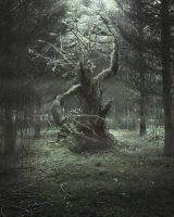 Tree Centaur by Lightartistry