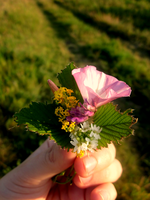 Small bouquet of flowers by fioler